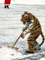 雪かき トラ